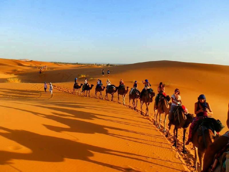 http://www.moroccodesertvip.com/wp-content/uploads/2018/11/camel-desert-trek-11.jpg
