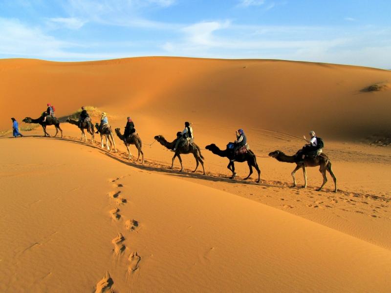 http://www.moroccodesertvip.com/wp-content/uploads/2019/01/camel-trekking.jpg